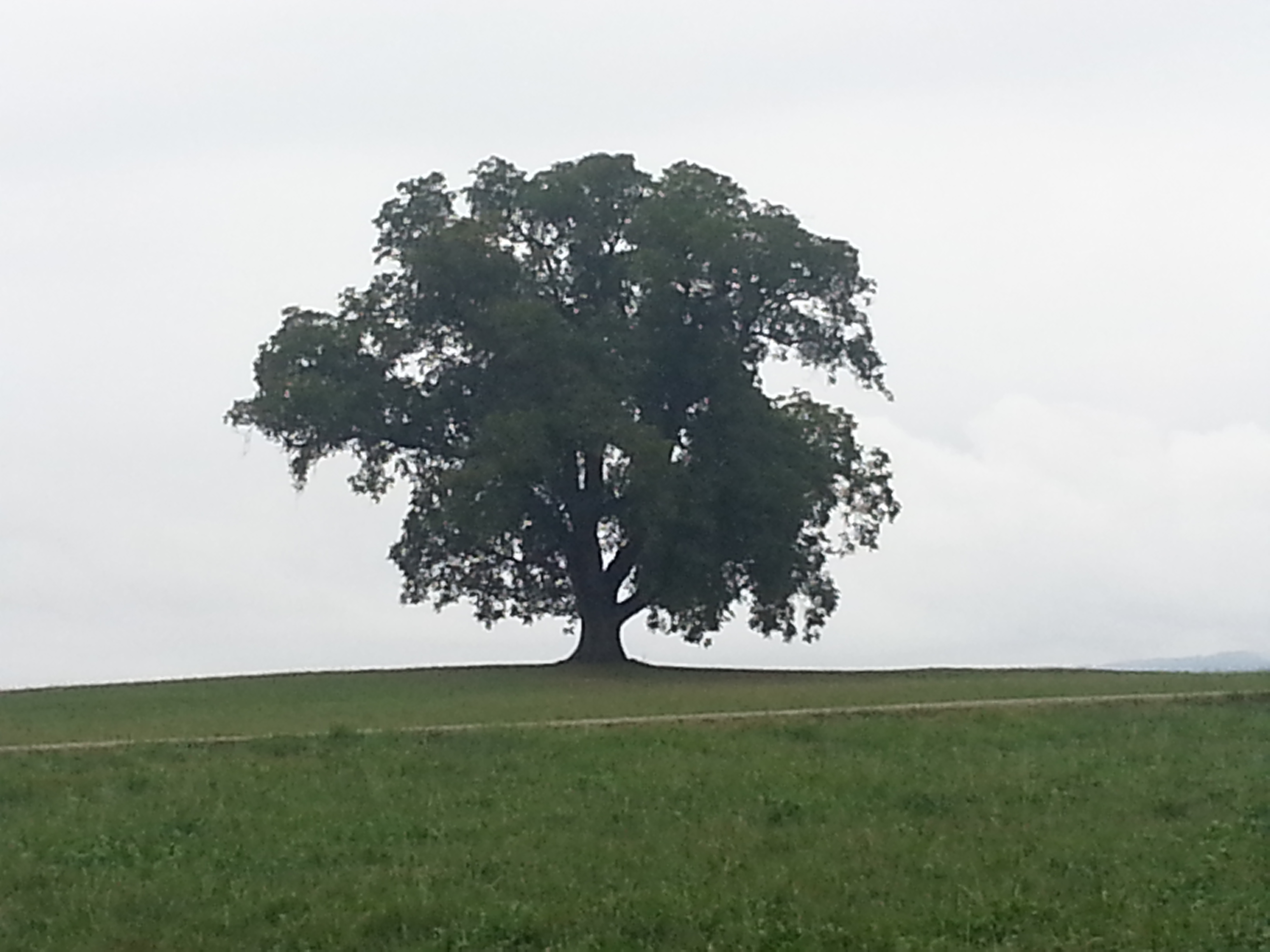A Lonely Tree in Switzerland